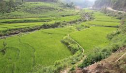 Everywhere rice fields are greening. The poor Nepalese population is hardworking. Every little piece of land is used to grow something to eat.