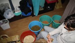 ...danach werden die verschiednen Sorten Nüsse im Hotelzimmer noch in zweihundert Tütchen verpackt...