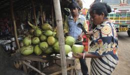 Mit raschen gezielten Schlägen öffnet die Standbesitzerin mit einem Messer die Kokosnüsse zum Trinken.