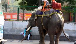Ein Elefant parkt ein.