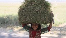 In regelmäßigen Abständen kommen Kinder eines benachbarten Dorfes mit Heuballen vorbei und beobachten neugierig die Bauarbeiten.