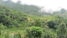 A view of the landscape in the morning. Everywhere there are terraces for rice cultivation.