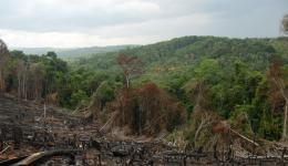 Die illegale Zerstörung von Regenwald zugunsten von Monokultur-Anbau oder Vieh-Futter ist im brasilianischen Regenwald noch immer an der Tagesordnung.