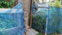 Um etwas frische Vitamine zu bekommen, pflegen die Menschen vor ihren aus Müll gebauten Behausungen essbare Pflanzen.