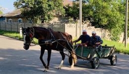 Auf den Dörfern sind Pferdefuhrwerke für den täglichen Transport noch weit verbreitet...