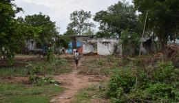Because of poisonous snakes the residents felled many trees, where the animals like to stay.